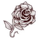 Temporary Tattoos, Fun-Tattoo